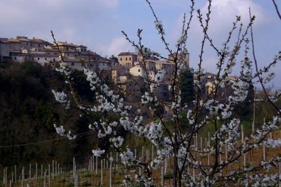 Ortezzano, primavera (1637 clic)