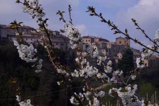 Ortezzano, primavera (2004 clic)