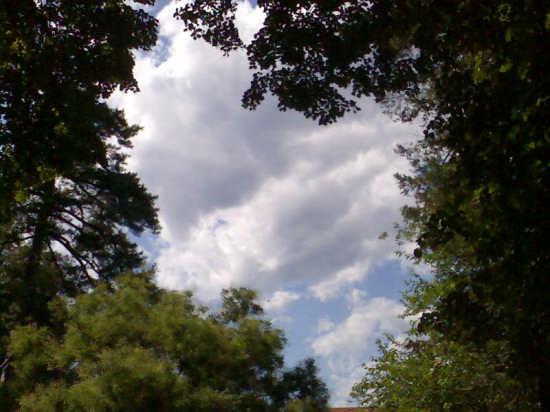 le nuvole fra il verde delle mura - Lucca (2203 clic)
