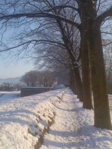 nevicata del 19 dicembre a Lucca (2980 clic)