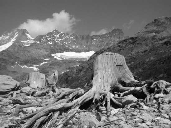 Bionaz, lago di la Place Moulin: Le radici della terra (4535 clic)
