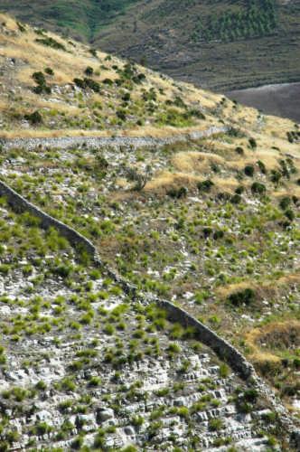 Contrada Canicarao: particolare - COMISO - inserita il 20-Mar-09