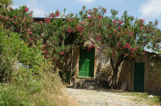 Finalborgo: la salita verso castel S. Giovanni (1948 clic)
