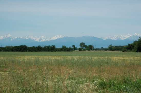 La campagna coltivata: sullo sfondo l'arco alpino - Saluggia (2811 clic)