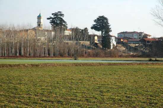 Saluggia: i due cedri monumentali ed il campanile della parrocchiale (1816 clic)