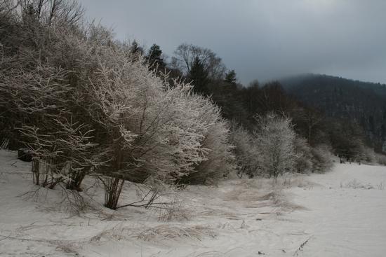 Colours of the winter - Caglio (1390 clic)