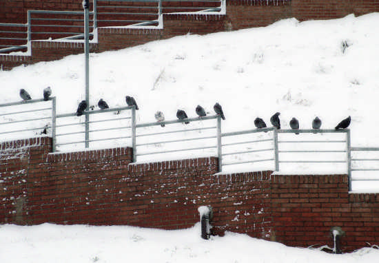 Moncalieri con  la neve Colombi (2627 clic)