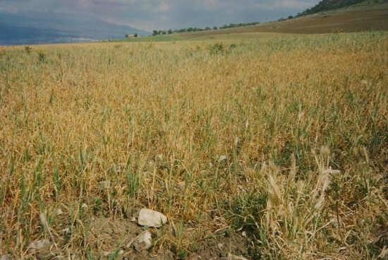 www.potatore.altervista.org - Regalbuto (2939 clic)