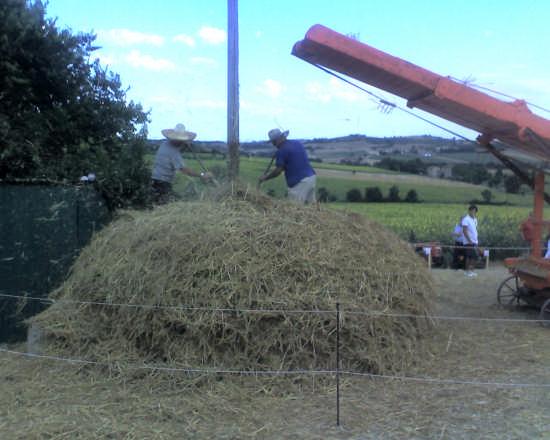 lavorazione frumento - Perugia (2997 clic)