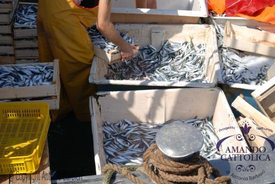 Pesce Cattolica porto, foto  (2167 clic)