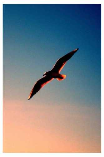 Gabbiano::) - Nettuno (4555 clic)