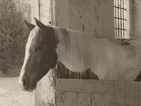 cavallo - Vieste (1336 clic)