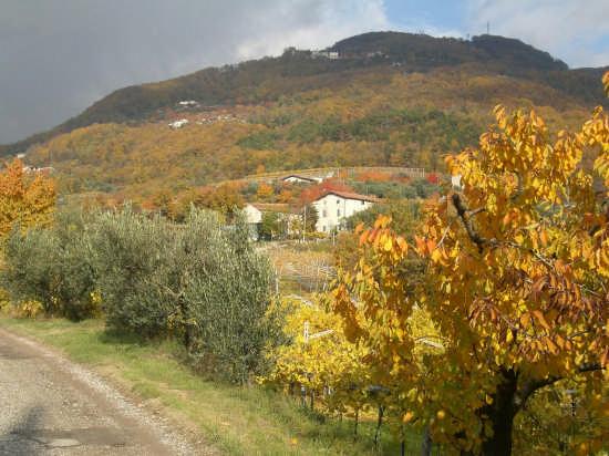 colori autunnali strada Castel di Negrar Ara - NEGRAR - inserita il 27-Apr-09