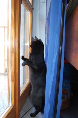 Mu...alla finestra!! - Torino (2063 clic)