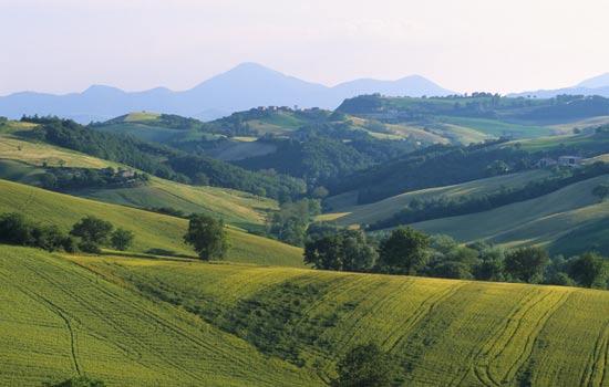 Arcevia, paesaggio primaverile (6070 clic)