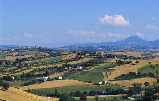 Corinaldo, paesaggio estivo (3686 clic)
