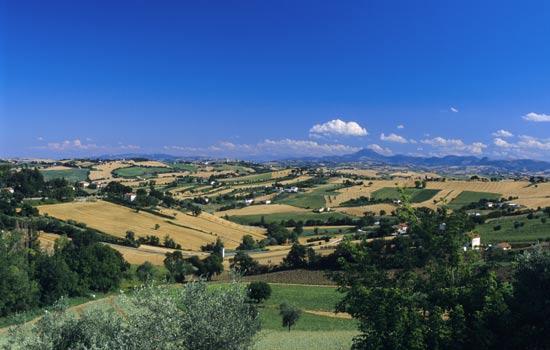 Corinaldo, paesaggio estivo (2821 clic)
