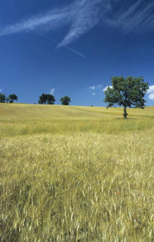 Fabriano, paesaggio estivo (2269 clic)