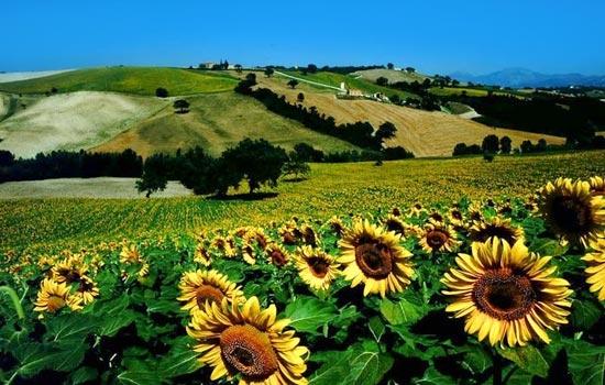 Fabriano, paesaggio estivo (10642 clic)