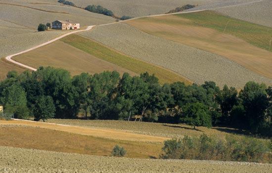 Fratte Rosa, paesaggio estivo (2257 clic)