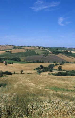 Monsano, vall'Esina (paesaggio estivo) (2256 clic)