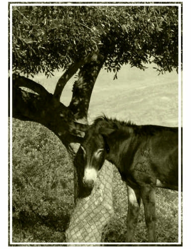 Sicilian Portrait - Calascibetta (4573 clic)