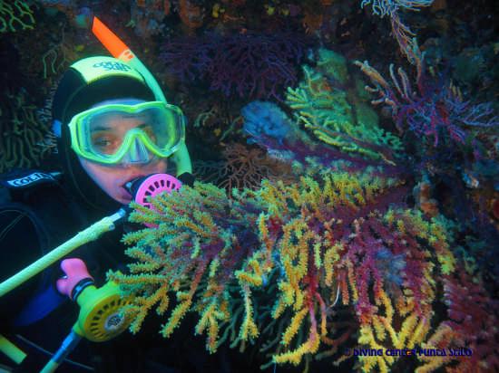 q 8 Alfina e Ventaglio di Gorgonia Bicolore - Stilo (2646 clic)