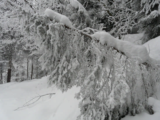 strada per Caset gennaio 2009 - Tremalzo (1952 clic)