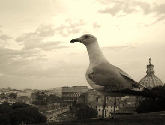 Roma dall'alto (3268 clic)