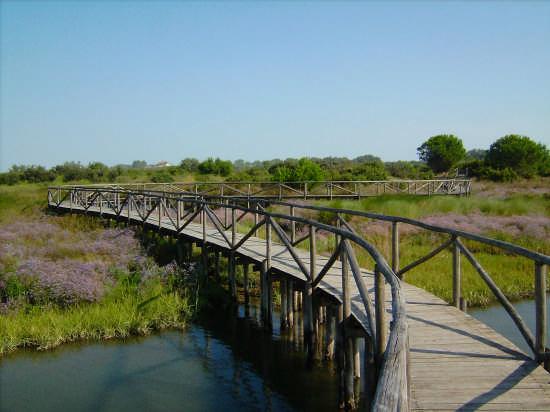 Parco del delta del Po - Caleri (3192 clic)