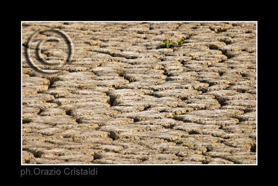 siccità - Paternò (2744 clic)