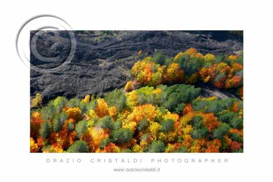 colata lavica di Piana Provenzana - Etna (2819 clic)