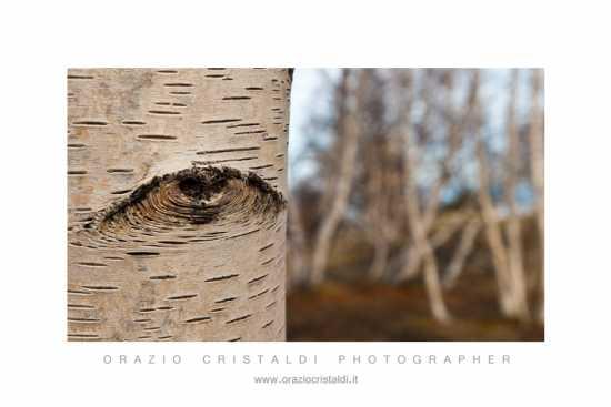 la natura ci osserva - Etna (2542 clic)