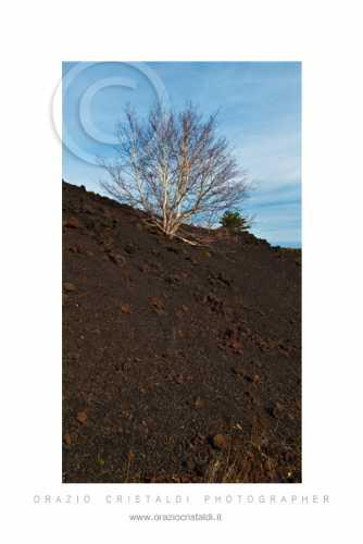 monti sartorius - Etna (3452 clic)
