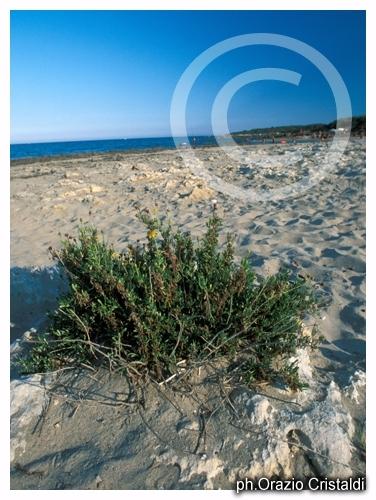 spiaggia alimini - Lecce (5886 clic)