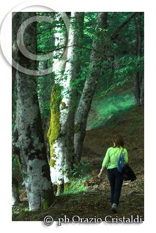 tra i boschi dei nebrodi (3022 clic)