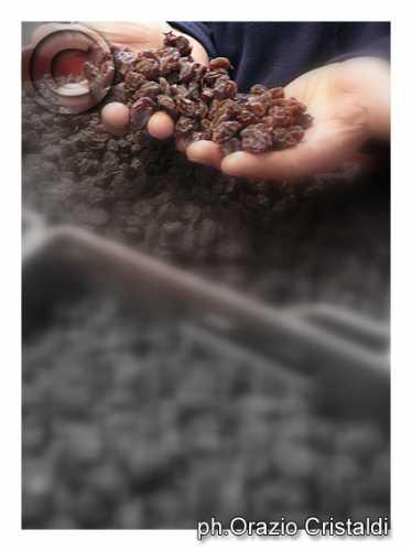 uva da passito nella tenuta di donnafugata - Pantelleria (2926 clic)