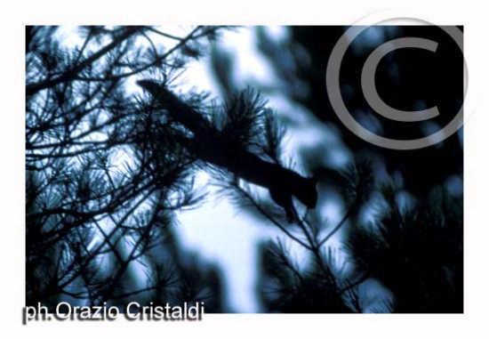 riserva naturale i giganti della sila (1756 clic)