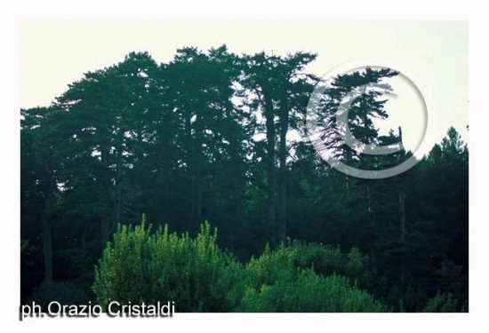 riserva naturale i giganti della sila - SILA - inserita il 15-Apr-08