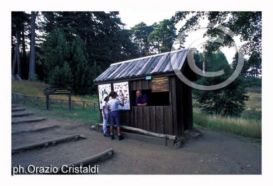 riserva naturale i giganti della sila (2171 clic)