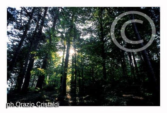 riserva naturale i giganti della sila (1619 clic)