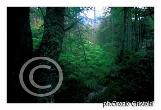 parco nazionale della sila (2205 clic)