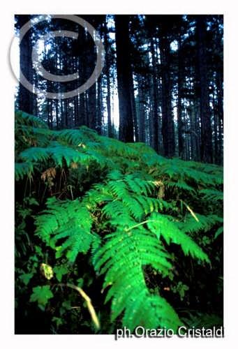parco nazionale della sila - SILA - inserita il 15-Apr-08