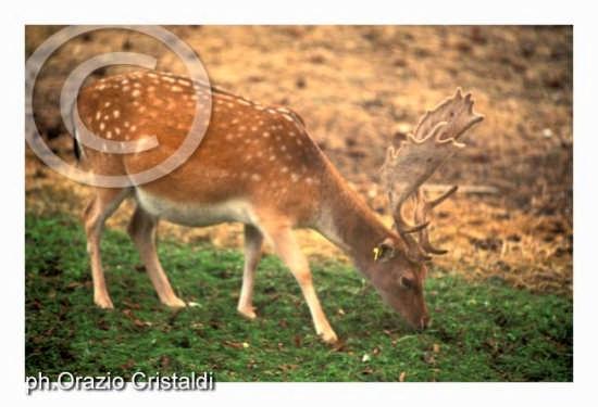 parco nazionale della sila  (2616 clic)