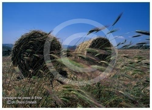campagna - Catenanuova (3280 clic)