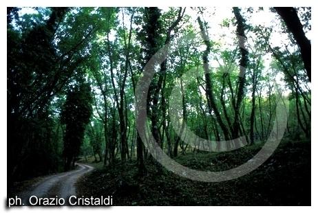 foresta umbra - Gargano (1997 clic)