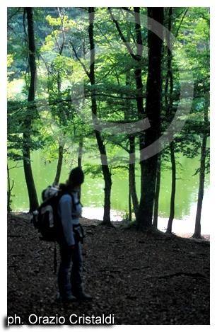 foresta umbra - il lago - Gargano (2450 clic)