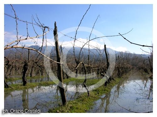 vigne - Randazzo (3343 clic)