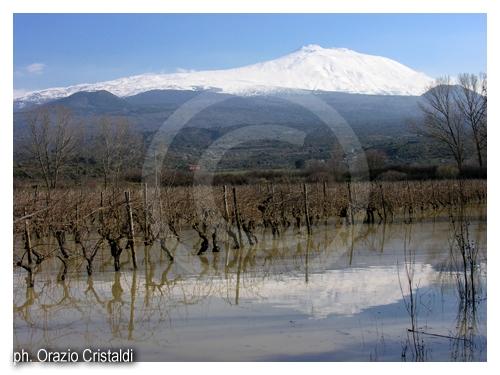 vigne - Randazzo (3232 clic)