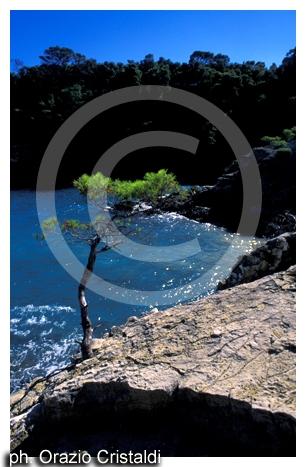 isole tremiti cala matano - TREMITI - inserita il 11-Jul-07